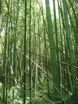 bamboo flooring renewable source